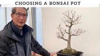 Choosing A Bonsai Pot Katsura