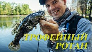 Трофейный ротан (головешка) в черте города. Приманки, снасть и тактика - Fishing Today