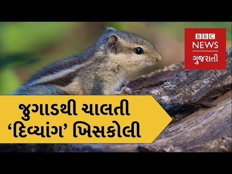 Turkey : A country where you can see a squirrel on wheels (BBC News Gujarati)