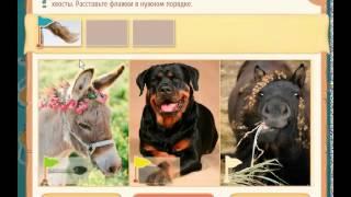 Расставляйка ответы на игру на 43 уровень. Помогите животным на фотографиях найти свои хвосты.