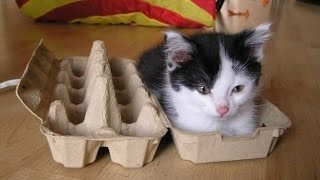 Кошки любят сидеть в коробках.