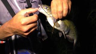 Такую РЫБУ я еще не ловил Клюет аквариумный СОМ Рыбалка с ночевкой