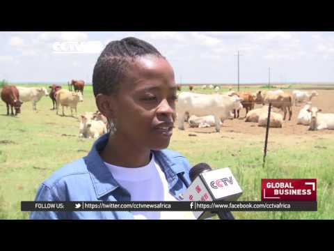 South African Youth Take Up Farming In Numbers