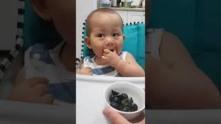13개월 아기의 블루베리 먹방[Blueberry Muk…