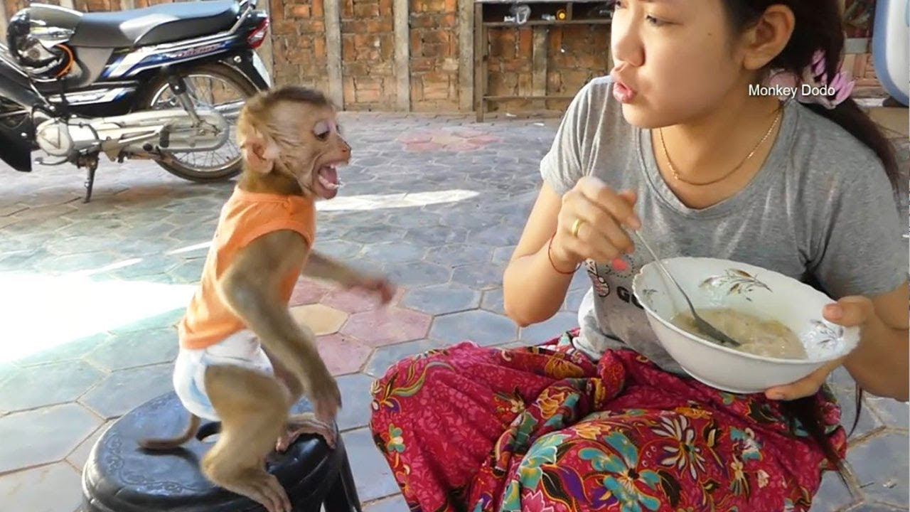 Monkey Baby Dodo Cry Loudly Cannot Wait Mom Feed Him