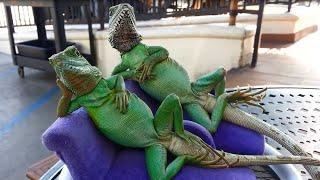 Смешные и милые ящерицы. Подборка 2016