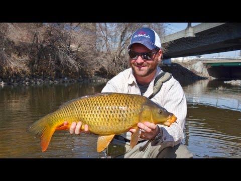 Carp Fly Fishing - South Platte River Denver