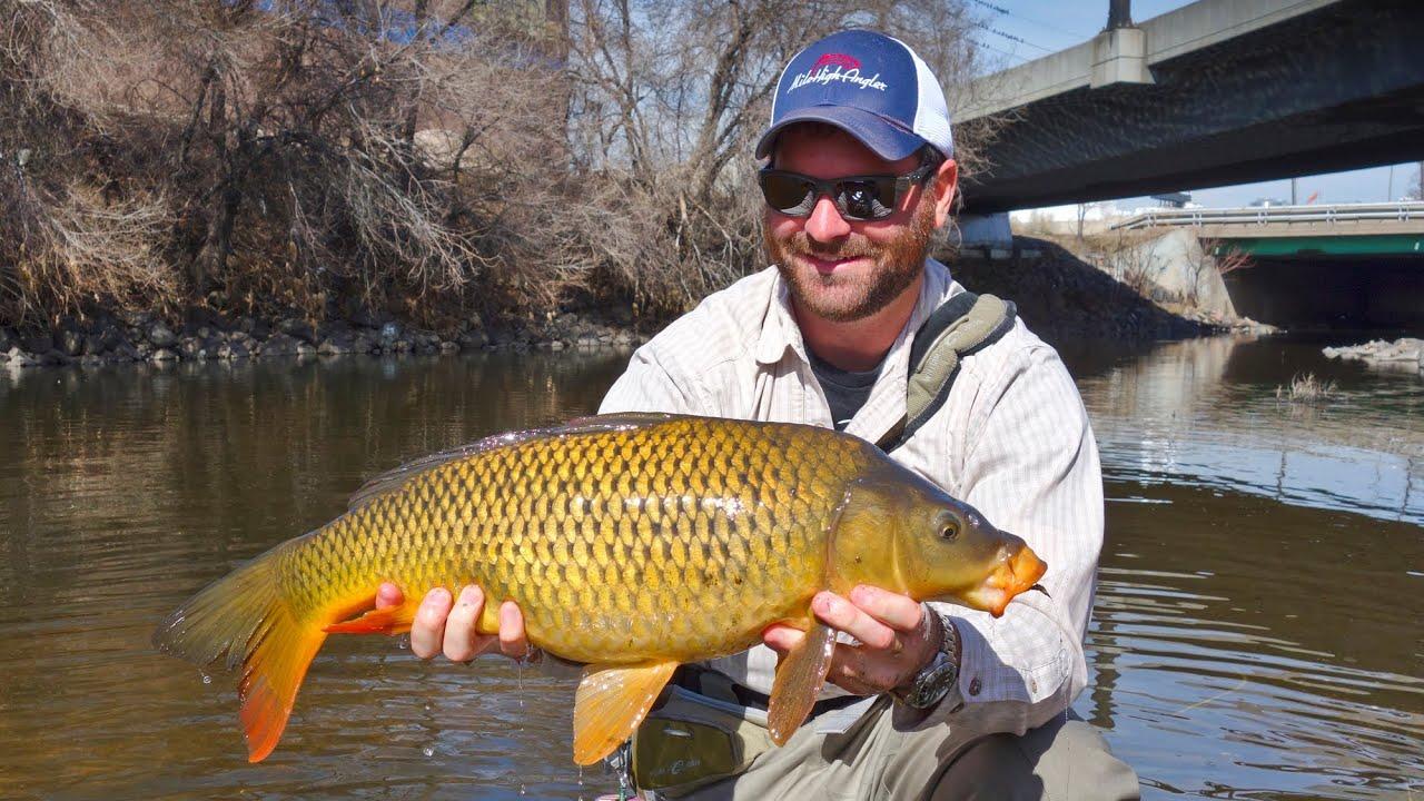 Carp Fly Fishing - South Platte River Denver - YouTube