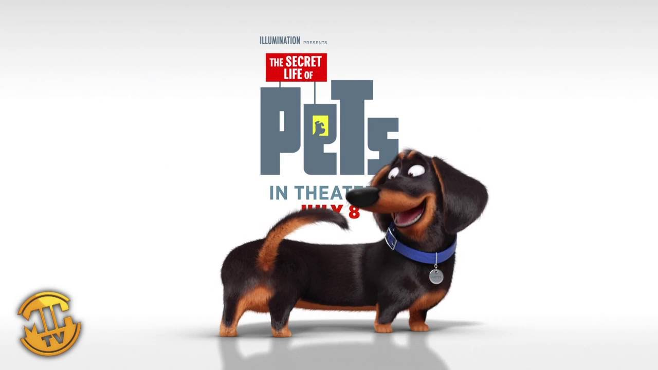 meet buddy   the secret life of pets   youtube
