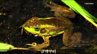 mix양서류 울음소리 Asian toad sound 국립환경과학원