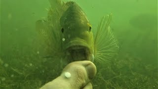The Foot Fighter! UFC :Ultimate Fish Championship. Funny Animals, Travel, Herping, Fishing 4K.
