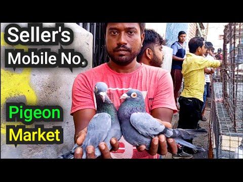 Galiff Street Pigeon Market Visit 16th June 2019 The Largest Bird Market In Asia