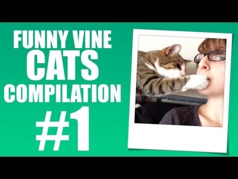 Cat Steals Cookie – Funny Vine Cats #1
