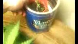 Closet Plant