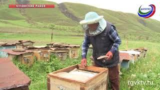 Бывший ветврач завел пасеку и раздает мед родственникам и знакомым