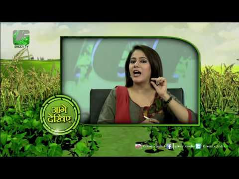 "Til  तिल ""Sesame cultivation""   તિલ Ki Kheti In Baatein Kheti Ki On Green TV"