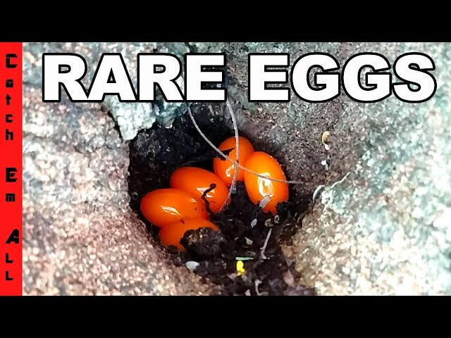 HATCHING RARE MYSTERY EGGS by the POND!