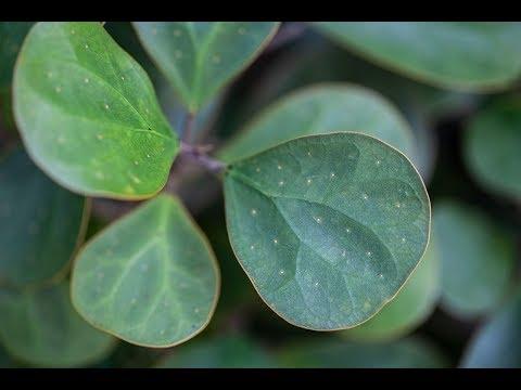 Fairchild Botanic Garden Tour —Plant One On Me — Ep. 094
