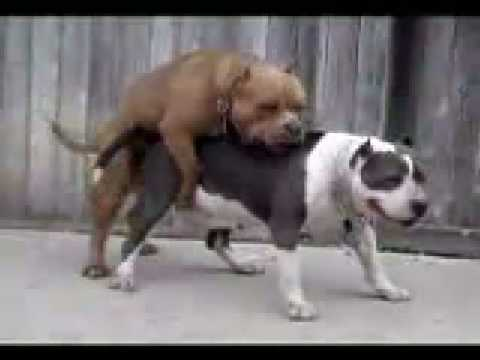 Cojiendo con el perro