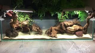 Aquarium planté avec un mur végétal, un mariage original