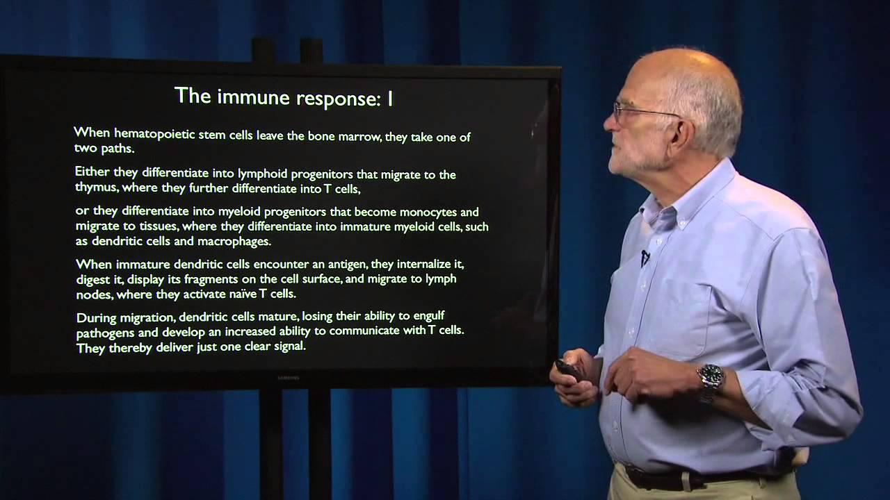 4.10 - Defenses: Adaptive immunity
