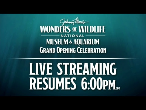 Wonders of Wildlife National Museum and Aquarium | Opening Celebration | Red Carpet Interviews