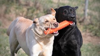 Puppy Socialization is the Most Important Part of Dog Training!