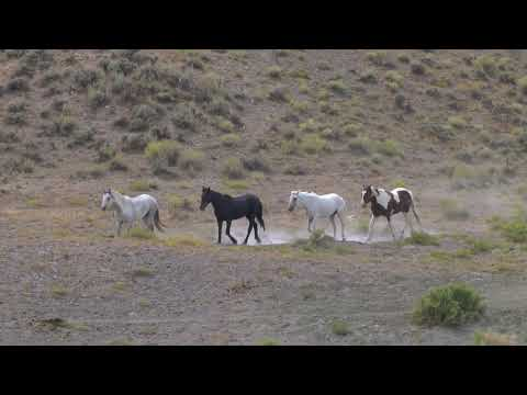 Wild Mustangs of Sand Wash Basin in Colorado Sept. 2019 by Karen King