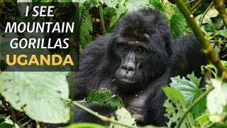 I SEE MOUNTAIN GORILLAS IN UGANDA!