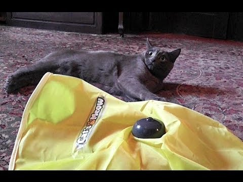 Cats Destroy Cat's Meow Cat Toy