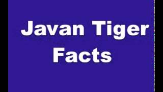 Javan Tiger Facts - Facts About Javan Tigers