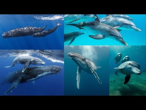 Andrew Bartzis - Whales and Dolphins - Their Role On Earth and in the Universe - Pt2