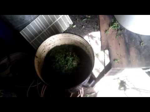 Ферментация иван чая в домашних условиях - 3 способа