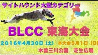 2016年5月1日 BLCC 東海大会 サイトハウンド大型カテゴリー BLCC...