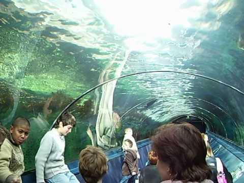 long glass underwater tunnel at Sydney Aquarium (June 15th-August 7th, 2006)