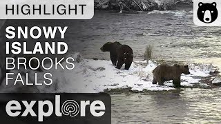 Mom And Cubs On Snowy Island - Brown Bears Live Cam Highlight 10/22/17