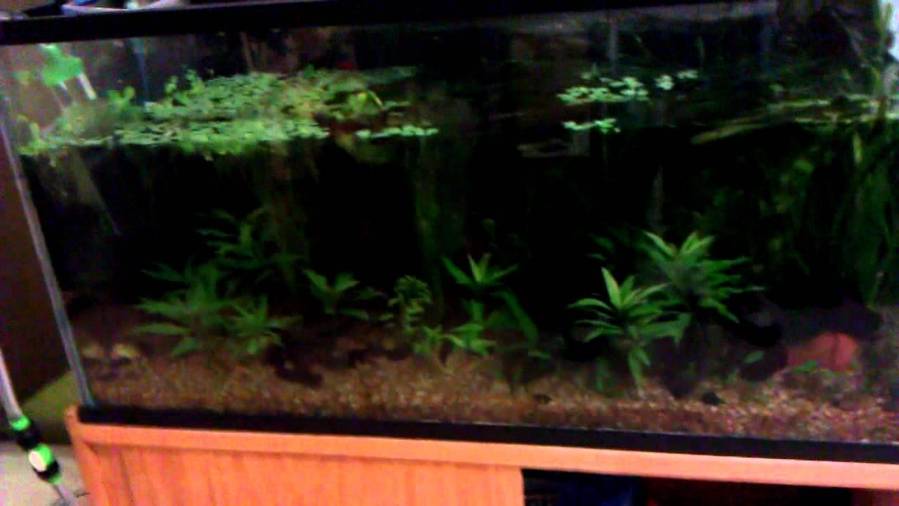 How To Raise Gh In Freshwater Aquarium - Aquarium Views