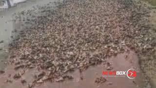 Видео дня на дорогу в Большом Камне высыпались килограммы рыбьих голов