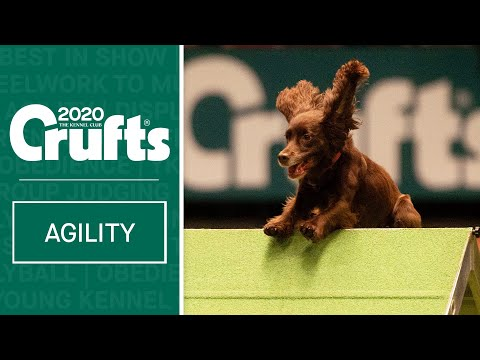 Agility | Crufts Team Small Final - Part Two | Crufts 2020