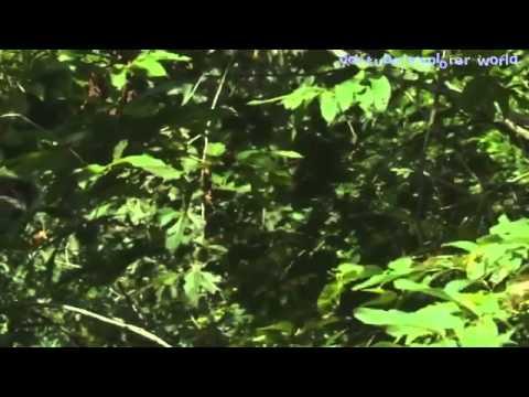Wild Life in Cambodia the Kingdom of Wonder   Angkor Wat Cambodia   YouTube