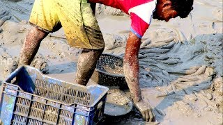 Fishing catching lot of Sola & catfish from pond mud water by hand Catch an Amazing Sola & catfish