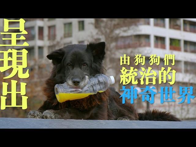 ❍❍《犬犬風塵》