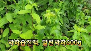 박하즙/진액및 박하건조600g■031-577-2500