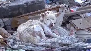 Resgate da cadela abandonada no lixão vai emocionar você