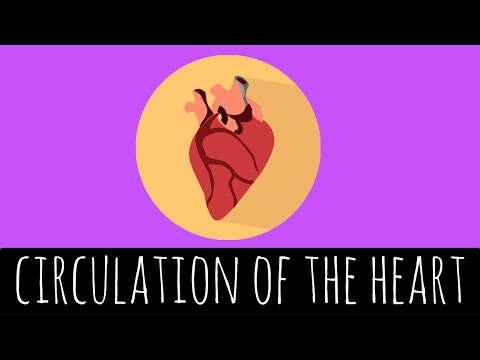 The Heart - Structure and Functions of the Heart - GCSE Biology ...