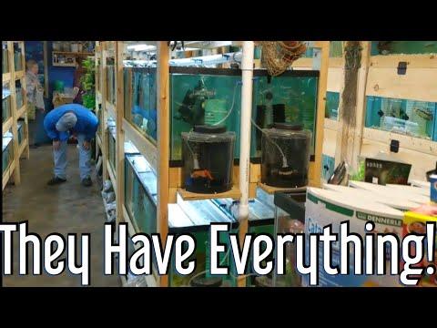 Local Fish Store Tour - The Waters Edge Aquarium