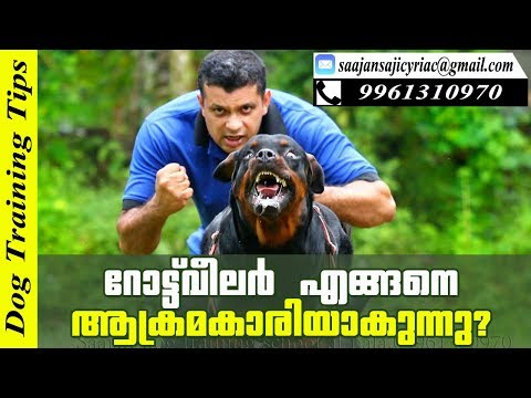 How Rottweiler Dog Turns Dangerous? Reasons You Must Know / Saajan K9 Dog Training School