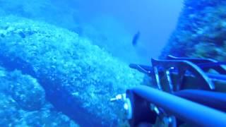 MARM Pesca Submarina en Mallorca 2015