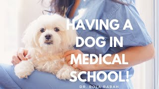 Get a Dog in Grad School?