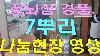 경품 1등 장뇌삼 나눔 현장 영상, 백영규 선생님 팬클…